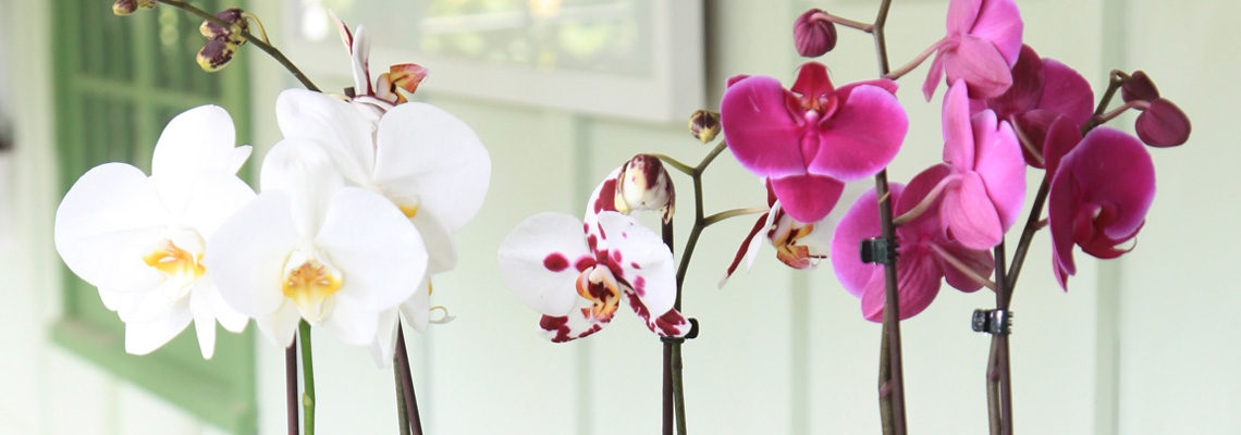 Orchid Banner Image0.jpg