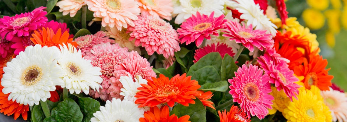 Gerbera Sundayz Group Banner Picture.jpg