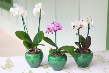 9cm Orchid in Ceramic2.jpg
